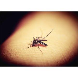 Insektsskydd